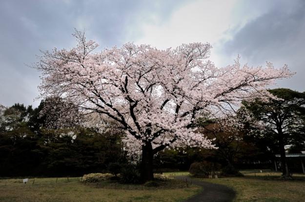 お気に入りの場所に桜が咲きました。