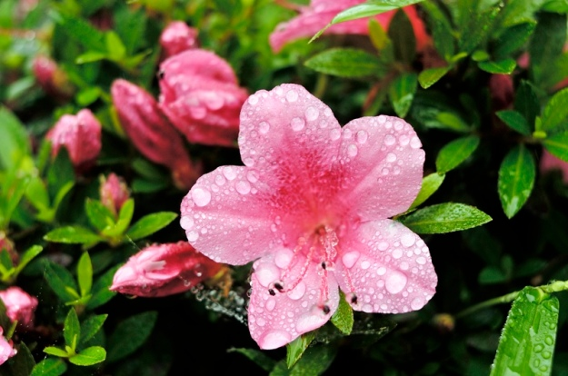 雨の中の花