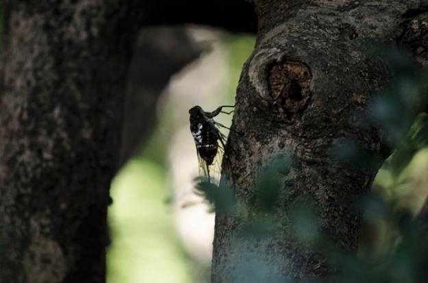 蝉も木陰で