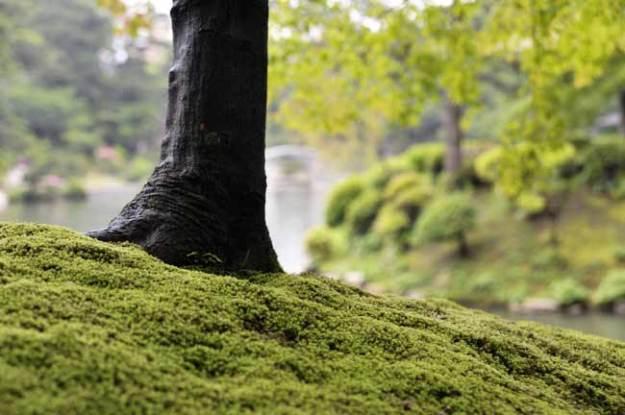 苔の緑が雨に濡れて綺麗です。
