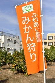青空にオレンジ色の旗が鮮やかです。